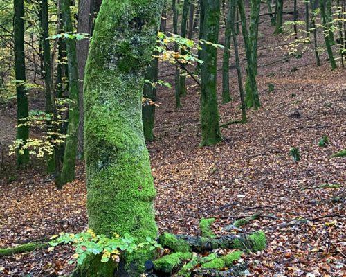 Elela Europe Naturcoaching Klimaschutwald Sandra Claassen
