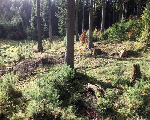 Elela Europe Nature Trottenwald Deutschland